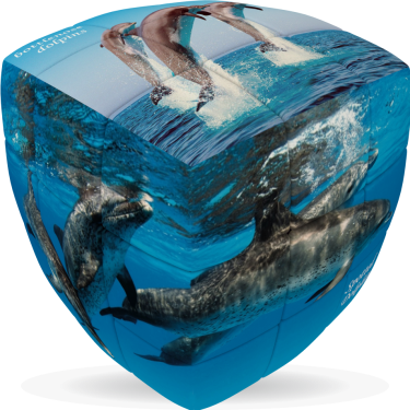 Dolphins - V-CUBE 3 Pillow