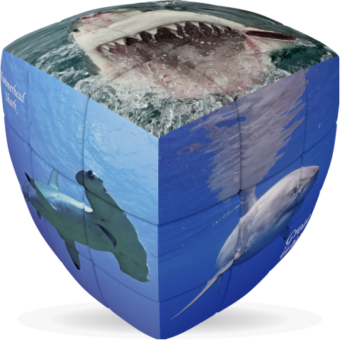 Sharks - V-CUBE 3 Pillow